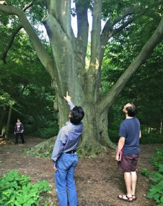 Eileen Flanagan, Jose Aguto, Owen Coursin, and the 300+ year-old beech tree