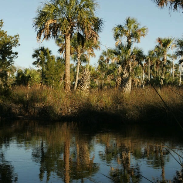 Of Concern: The Sabal Trail Project