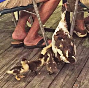 Ducks (and feet) at Fall Interim Yearly Meeting Group Dinner, 1 Tenth Month 2016