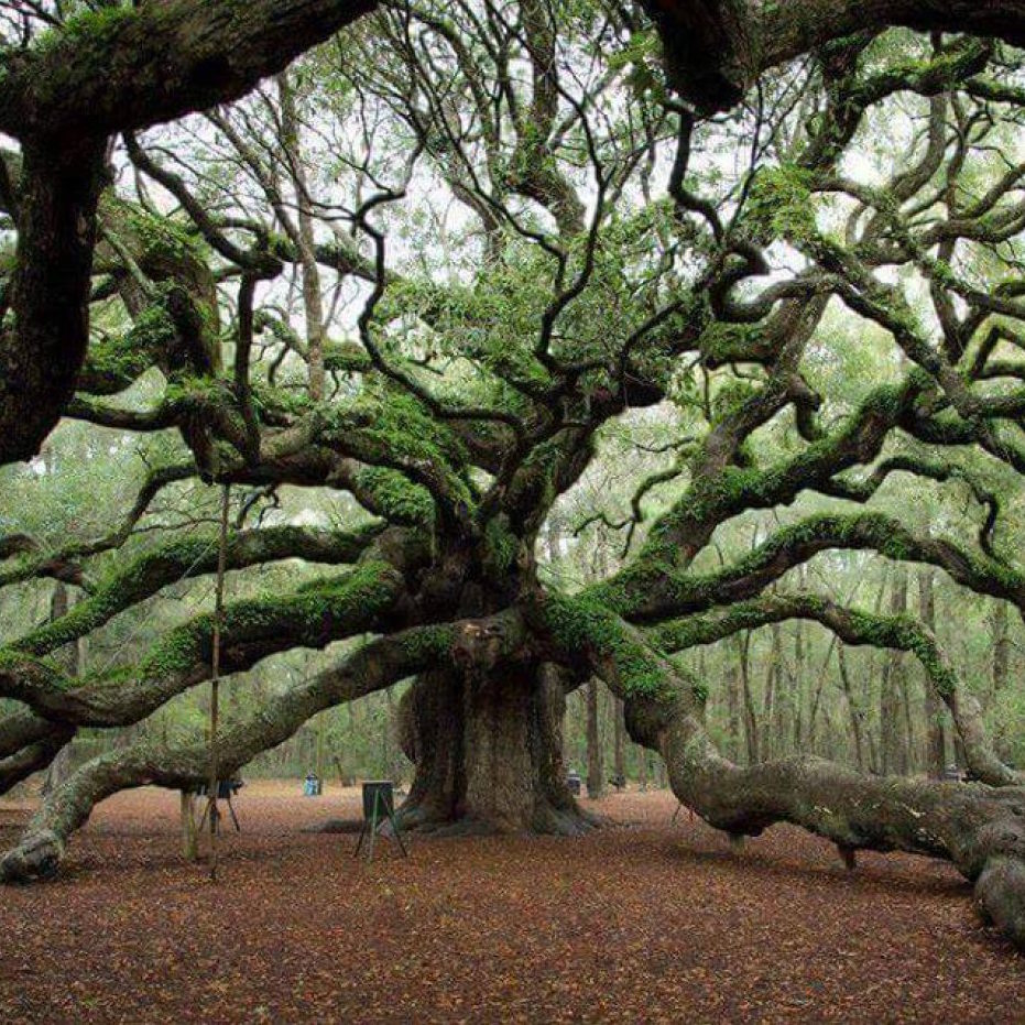 'Ancient Tree,' UN Earthcare Coalition