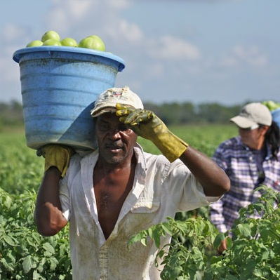 Immokalee Farmworker. Photo: CIW